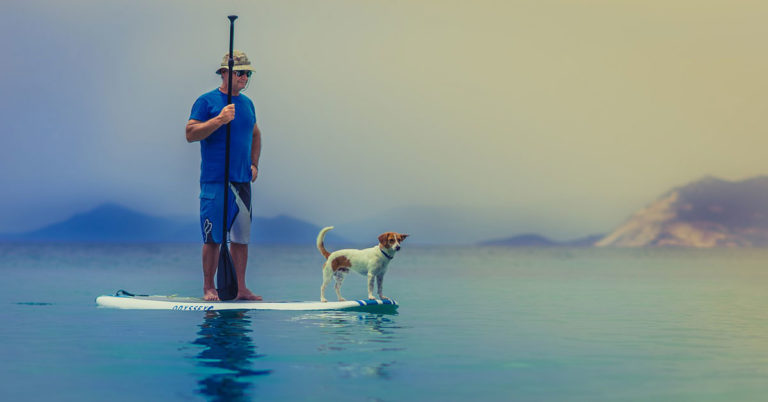 paddle boarding with dogs in the united states